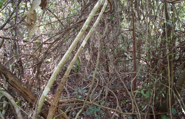 Floresta degradada na Amazônia paraense (Foto: Erika Berenguer / Divulgação)