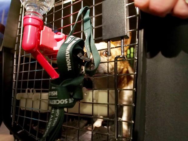 Cachorro resgatado bebe água dentro de gaiola, ao chegar nos EUA nesta segunda-feira (5) (Foto: AFP Photo/Robert MacPherson)