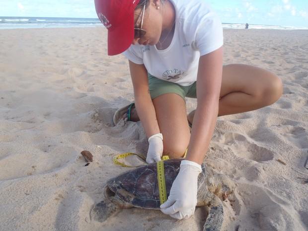 tartaruga  (Foto: Nathalia Berchieri/Projeto Tamar)