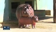 Começa votação para escolha do nome de filhotes do zoológico de BH