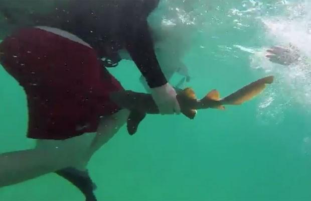 Filhote de tubarão foi responsável por ataque 'mais fofo do mundo' (Foto: Reprodução/YouTube/heather grant)