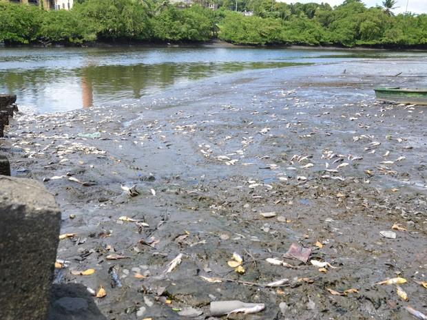 Poluição de indústria causou mortandade, afirma ambientalista  (Foto: Walter Paparazzo/G1)