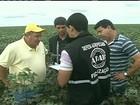 Liberação de agrotóxico novo causa polêmica em Brasília