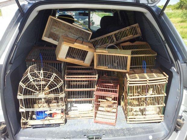 Pássaros silvestres eram comercializados na 'Feira das Trocas' no Bairro Lamarão em Aracaju (SE) (Fot Divulgação/Pelotão Ambiental)