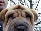 Quarteto é acusado de roubar 13 cãezinhos de pet shop nos EUA