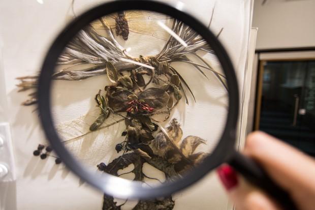 Lilian Maus, Estudos sobre a Terra - Herbarium, 2016 (Foto: Divulgação)
