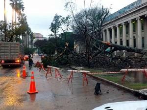 Árvore caiu na Avenida Oscaldo Aranha, em Porto Alegre (Foto: Mauro Saraiva Junior/RBS TV)