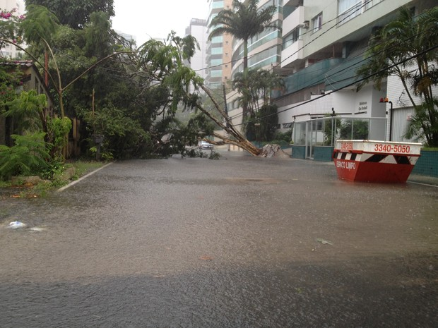 Árvore cai em rua na Praia da Costa, em Vila Velha. (Foto: Marcelo Nolasco/ VC no ESTV)