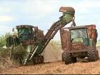Usinas de SP antecipam a colheita da  cana-de-açúcar