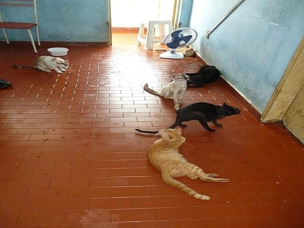 Operação da Polícia Civil foi deflagrada na manhã desta sexta-feira, em Manaus (Foto: Divulgação/Polícia Civil)