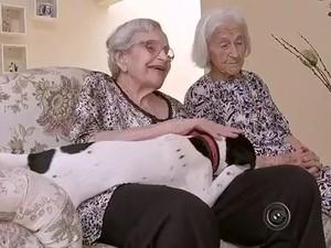 Terapia é realizada com o auxílio dos animais.  (Foto: Reprodução / TV TEM)