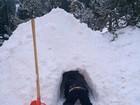 Filho de Luciano Huck entra em iglu 'construído' pelo pai durante as férias