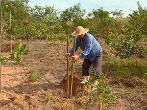 Pescador se torna plantador de árvores na represa de Salto Grande (Foto: Márcio de Campos/TG)