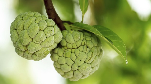 P da fruta noni (Foto: Getty Images)
