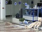 Torcedores do Cruzeiro são suspeitos de quebrar loja do clube em BH