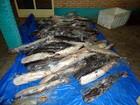 Homem é preso com 472 quilos de pescado irregular em cidade de MT