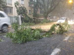 chuva São Paulo árvore Alameda Santos (Foto: Fabio Tito/G1)