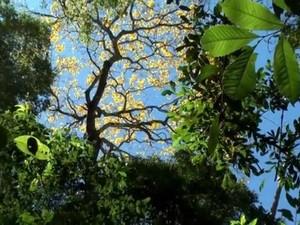 Floresta em Gaúcha do Norte (MT) foi estudada por pesquisadores (Foto: Reprodução/Unemat)
