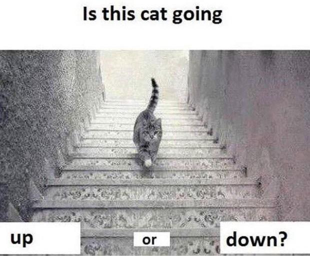 Internautas debatem se gato está subindo ou descendo escada (Foto: Reprodução/Twitter)