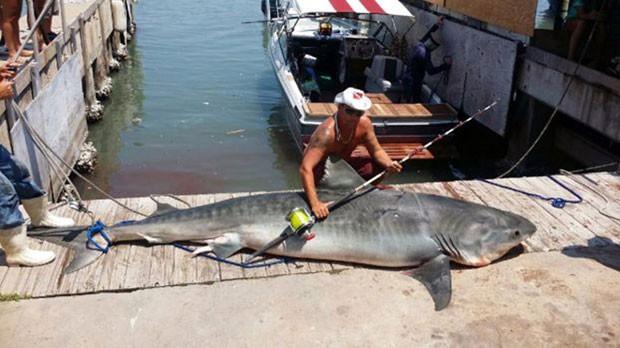 Com anzol, pescador americano fisga tubarão de quase 4 metros e 367 kg
