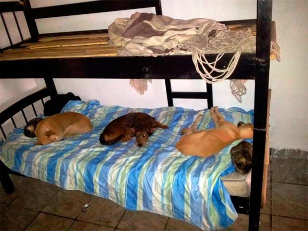 Animais foram encontrados dormindo nas camas dos pacientes (Foto: Divulgação/Polícia Civil do RN)