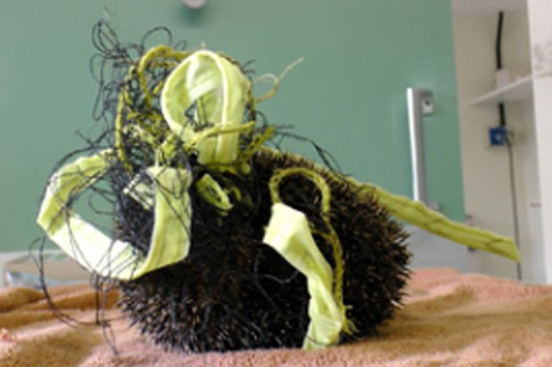 Ouriço foi resgatado após ser encontrado preso em uma rede de badminton (Foto: Divulgação/RSPCA)