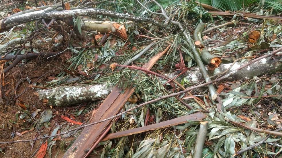Árvores nativas foram desmatadas em uma área de amortecimento do Parque Estadual dos Três Picos (Foto: Divulgação  /  UPAM)