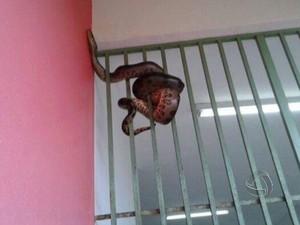 Cobra foi encontrada em creche em Sinop (Foto: Reprodução/TVCA)