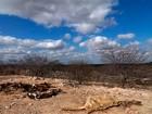 Atingidas pela seca, 19 cidades do RN ainda não renovaram carros-pipa