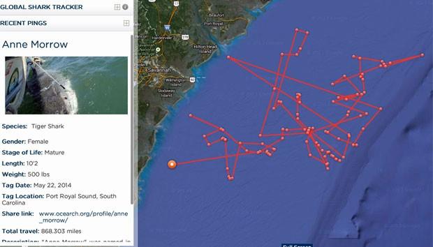 """Na imagem é possível analisar o percurso feito pelo tubarão """"Anne Morrow"""", que recebeu a marcação em maio deste ano durante passagem da expedição pelos Estados Unidos (Foto: Reprodução/Ocearch)"""