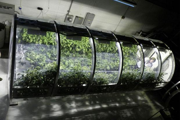 NASA cria estufa para alimentar astronautas no espaço (Foto: Divulgação)
