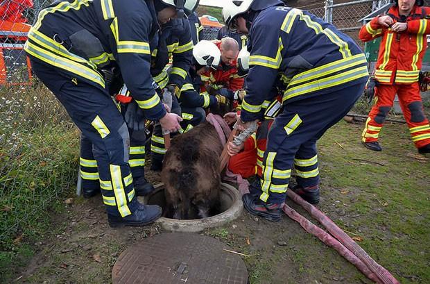 Animal sofreu apenas ferimentos leves na queda (Foto: AFP)