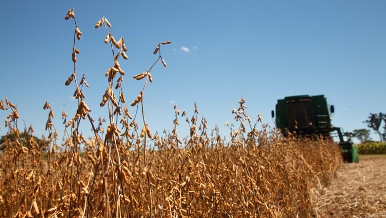 soja, colheita (Foto: Globo Rural)