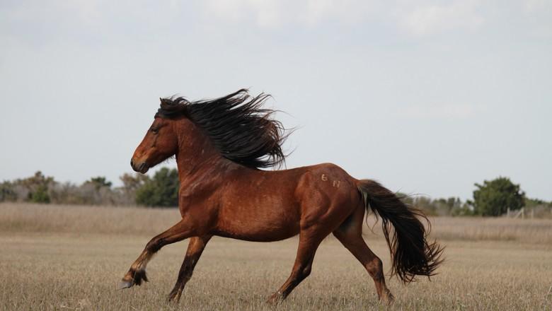 cavalo-equino-correndo-galope (Foto: firelizard5/CCommons)
