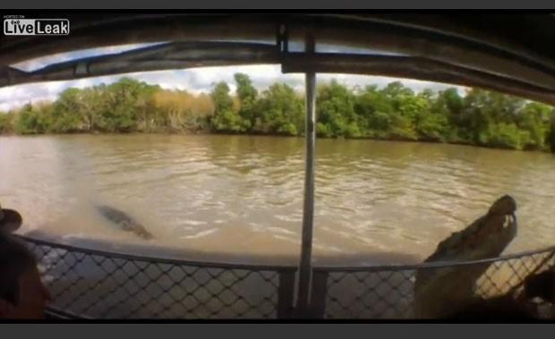 Crocodilo quase mordeu mão de guia no rio Adelaide (Foto: Reprodução/Live Leak/Aussie)