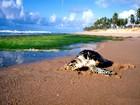 Praia do Forte tem encantos naturais; veja (Jota Freitas / Setur)