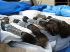 Receita Federal doa quase 250 kg de cabelos apreendidos na fronteira