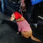 Animais se 'fantasiam' para aproveitar a folia (Ina Fassbender/DPA/AFP)