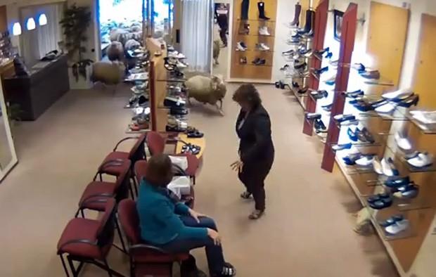 Vendedora e cliente ficaram assustadas quando rebanho de ovelhas invadiu loja de sapatos na Holanda (Foto: Reprodução/YouTube/LiveFocus West)