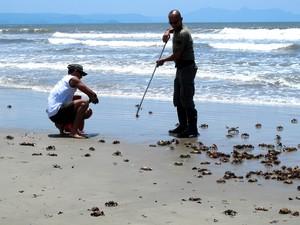 Técnicos ambientais removem os animais da faixa de areia (Foto: Mariane Rossi/G1)