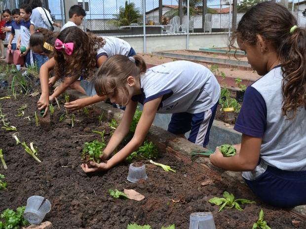 Projeto Horta nas Escolas aposta na dupla função pedagógica de estimular a preservação do meio-ambiente e de criar hábitos saudáveis de alimentação entre os alunos (Foto: Adrovando Claro)