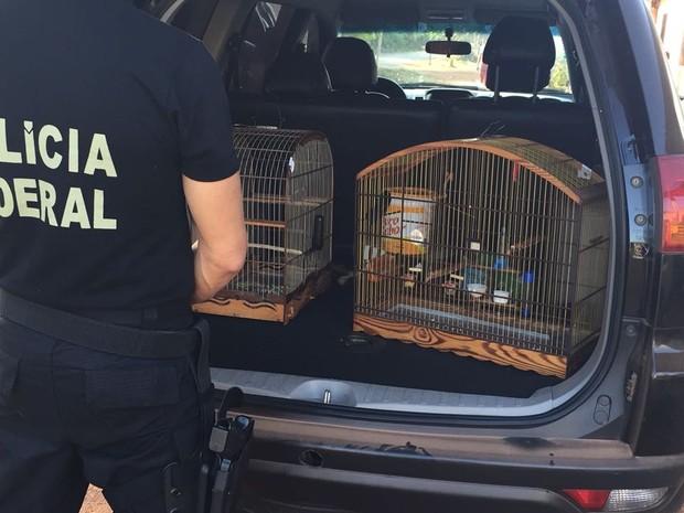 Operação ASAS da Polícia Federal no Maranhão para combater caça ilegal a animais silvestres (Foto: Dilvulgação / PF)