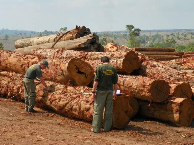 Aproximadamente 6.000 m³ de madeira foram apreendidos pelo Ibama em 35 dias de operação (Foto: Divulgação/Ibama)