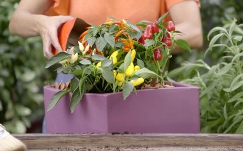 Veja o passo a passo para criar uma horta caseira de ervas aromáticas