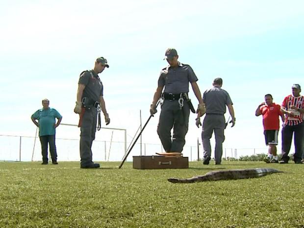 Animal foi capturado pelos bombeiros e ninguém ficou ferido (Foto: Reprodução/EPTV)