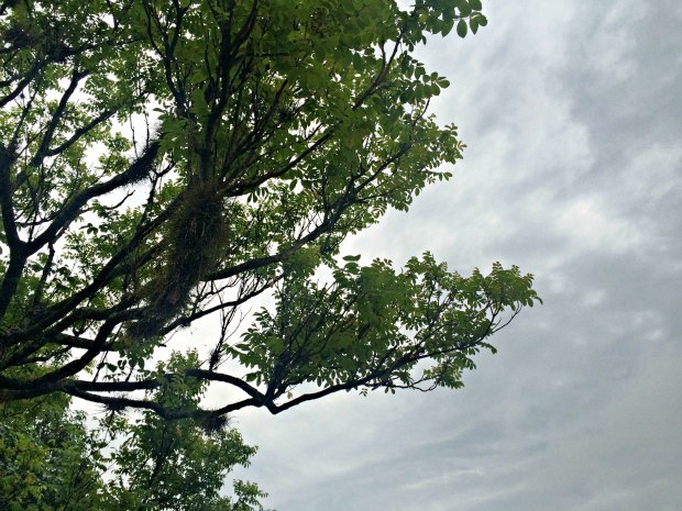 Previsão é de um início de novembro chuvoso em Mato Grosso do Sul, segundo a meteorologia (Foto: Isabela Cavalcante/G1 MS)