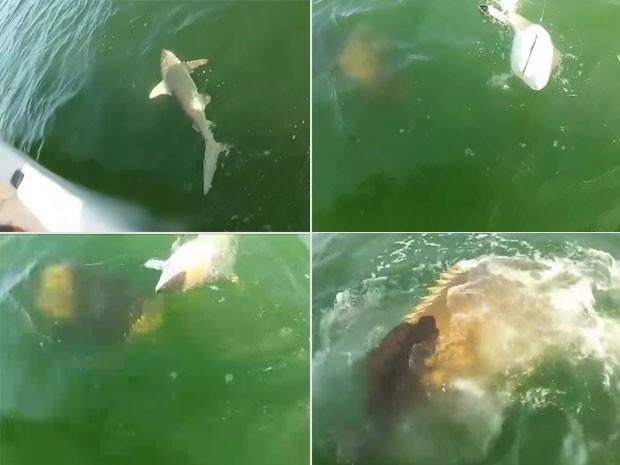 Vídeo impressionante mostra um peixe enorme engolindo de um só vez um tubarão de 1,2 metro (Foto: Reprodução/YouTube/Gimbb14)