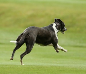 Cachorro (Foto: Richard Heathcote/GettyImages)