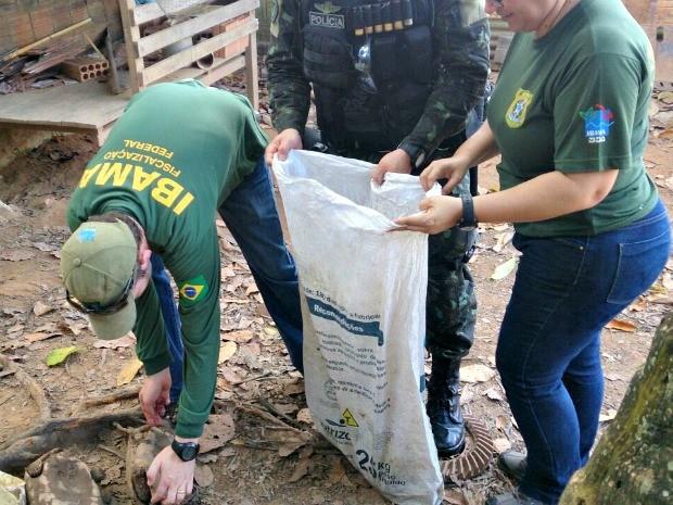 Além dos 80 kg de carne de caça, a polícia apreendeu duas armas de fogo e munições (Foto: Divulgação da polícia)