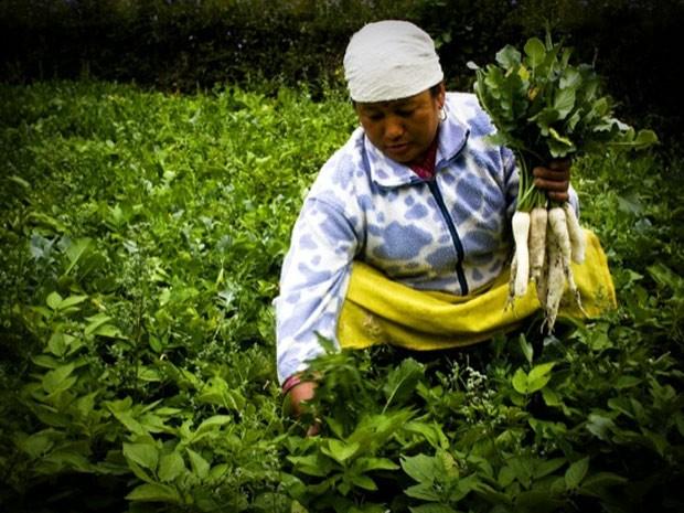 Mulher nepalesa trabalha em horta cultivada com apoio da Organização das Nações Unidas para Agricultura e Alimentação (FAO). (Foto: Sailendra Kharel/FAO/Divulgação)